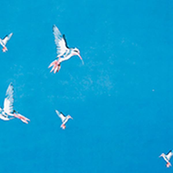 premium yoga mat humming birds flat